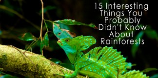 15 Interesting Things You Probably Didn't Know About Rainforests