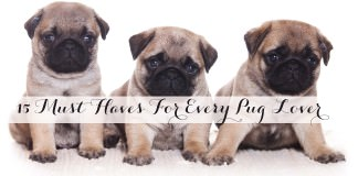 15 Must Haves For Every Pug Lover