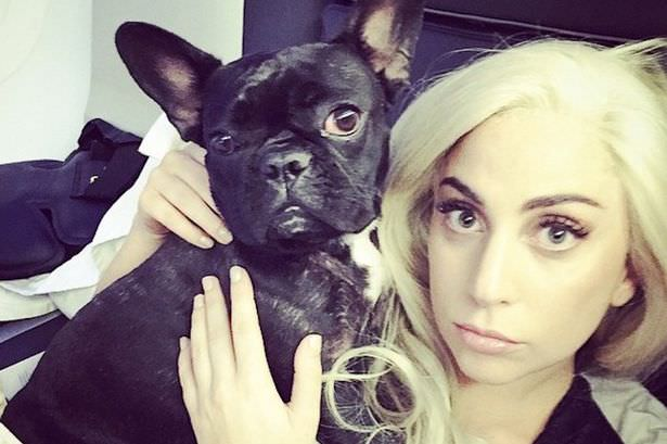 Lady-Gaga with pet