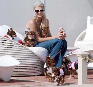 Paris-Hilton-Dogs