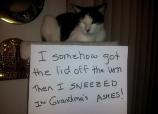 cats who don't care about their actions