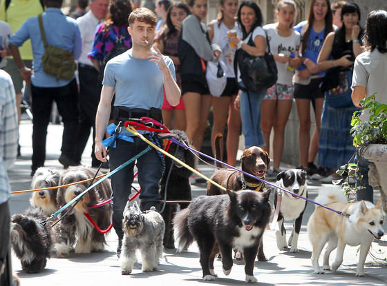 daniel radcliffe perfect dog walking