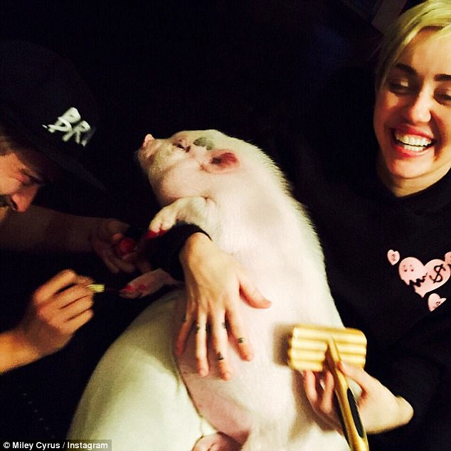 miley_cyrus_with pet pig