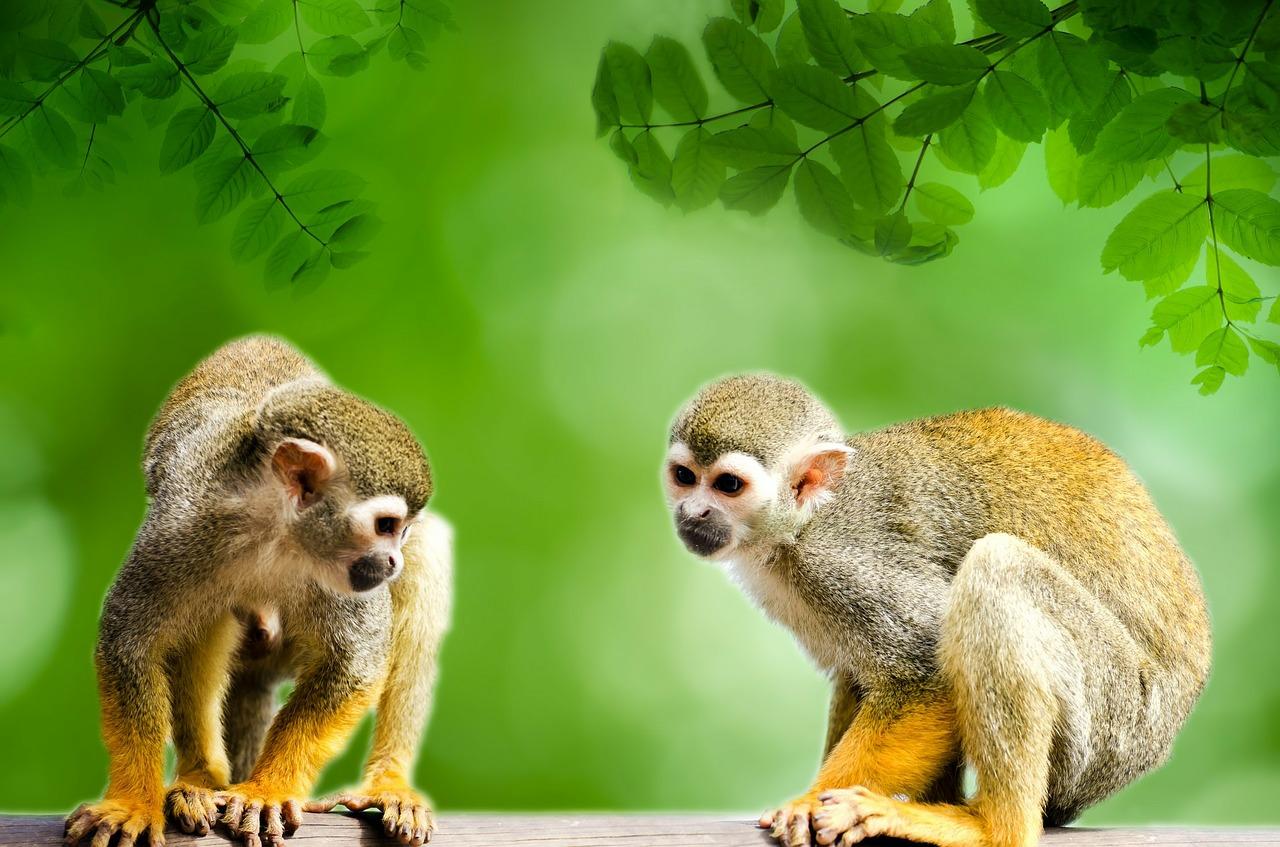 monkey-314690_1280