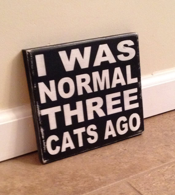 every cat lady needs