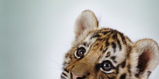 animals that are cute but dangerous