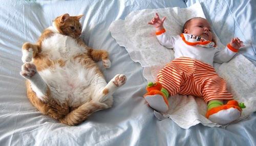 chubby animals