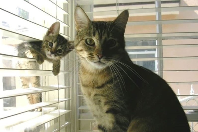 animals and their mini-me