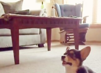 most awesome puppy moment