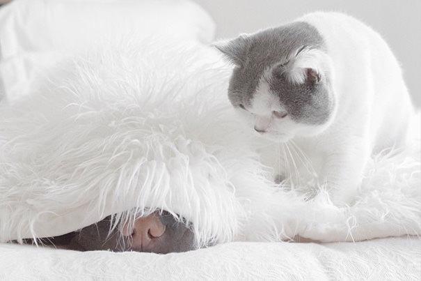 best animal friends