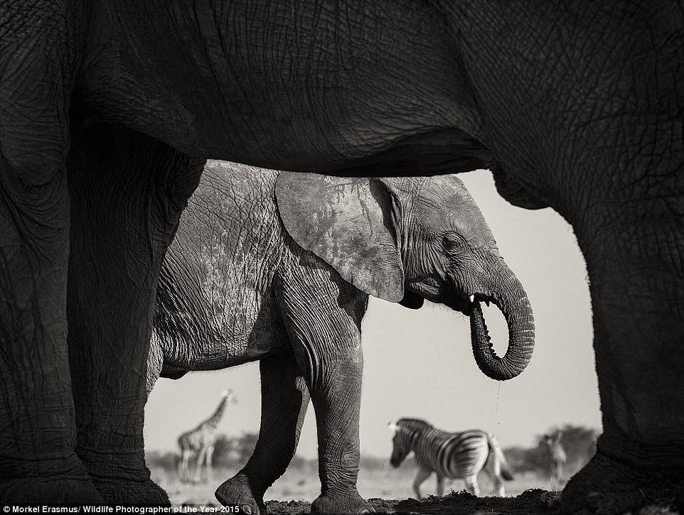 'Natural frame' by Morkal Erasmus, Wildlife Photographer of The Year 2015