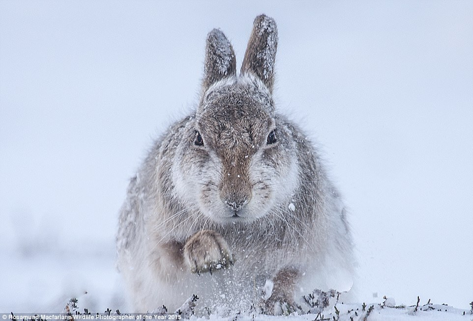 Via Rosamund Macfarlane/Wildlife Photographer of The Year 2015