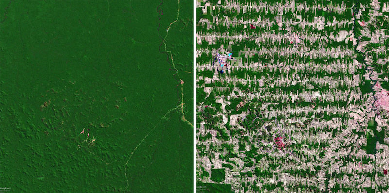 Google Earth view of The Amazon Rainforest, 1975 (left) and 2008 (right).