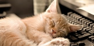 napping