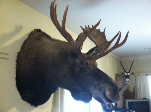 Courtesy of hunting-newfoundland.com