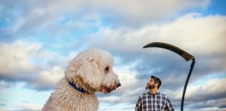 He Supersized His Dog In These Incredible And Funny Photos