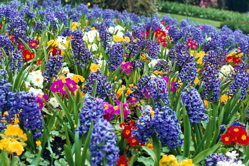 via Flowergardenpictures.com