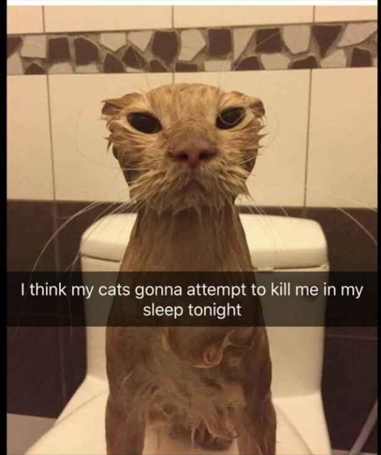 cat memes tumblr-6
