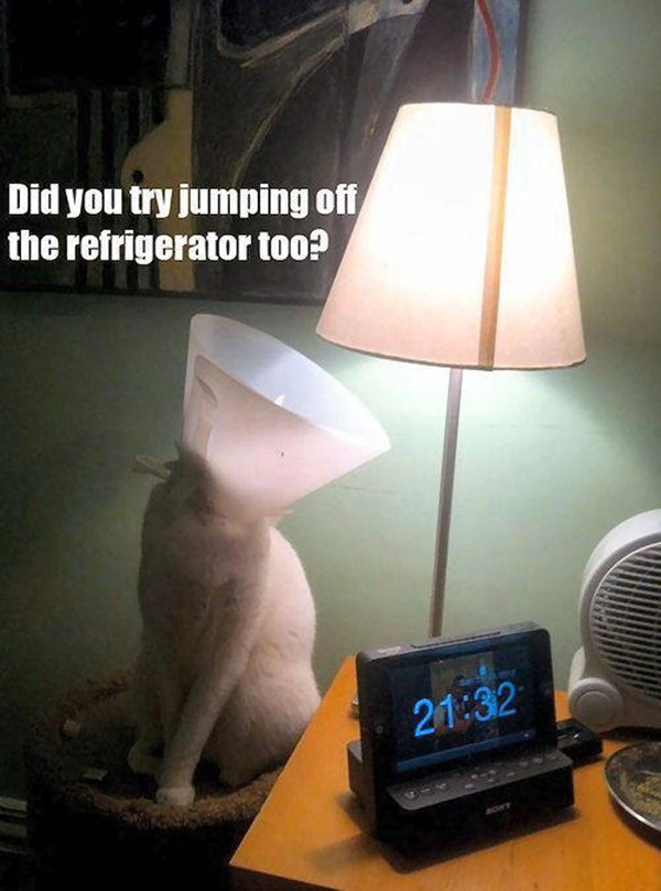 funny cat pics with captions facebook