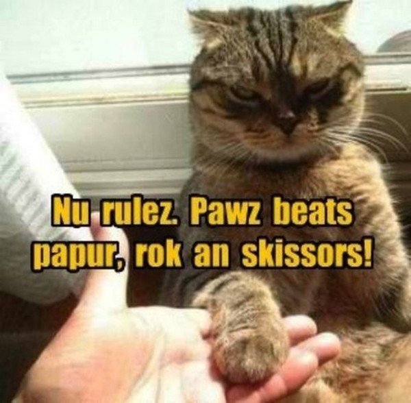cat images with captions 20
