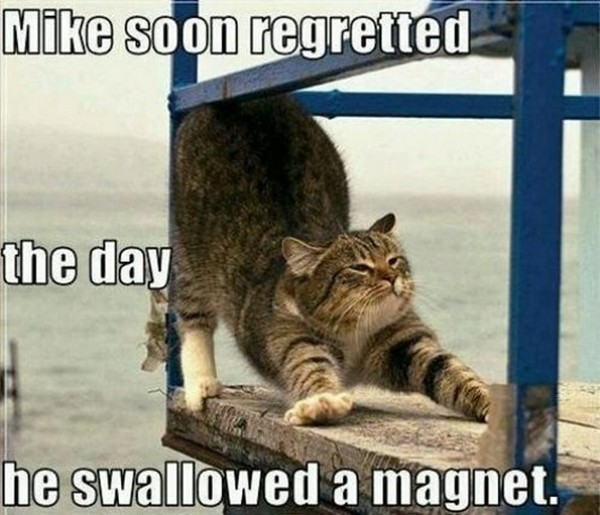 cat images with captions 2w