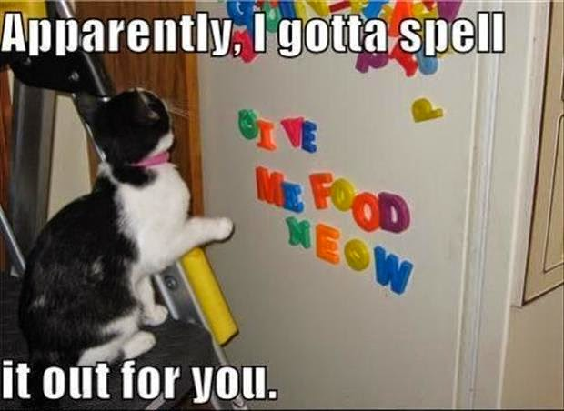 funny cat pics with captions facebook-0