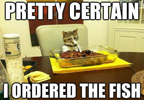 cat memes funny 2020