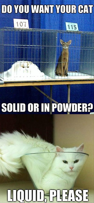 hilarious cat memes -2a