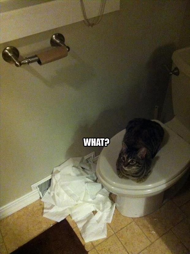 hilarious cat memes -2d2
