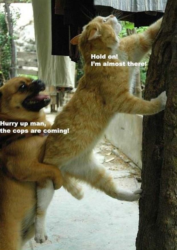 crazy cat lady memes 23