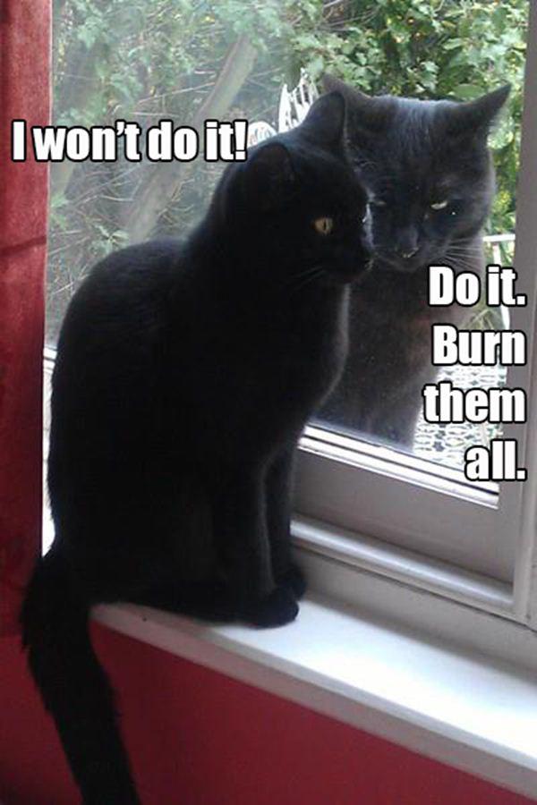 crazy cat lady memes 2r