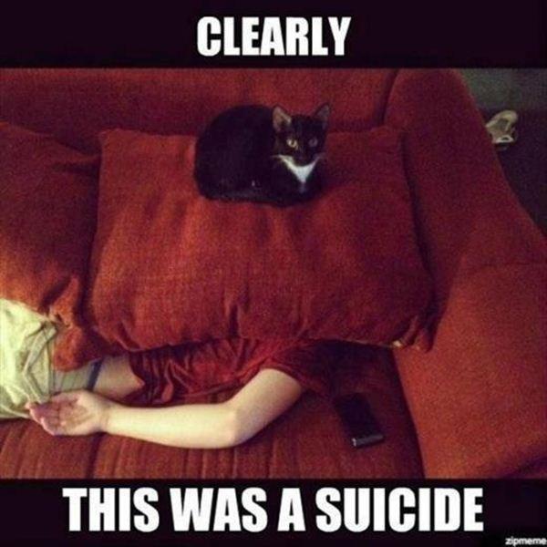 crazy cat lady memes 23s