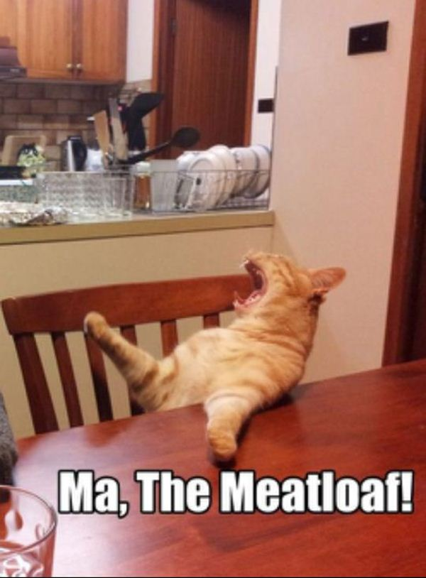 cat memes 2020-9