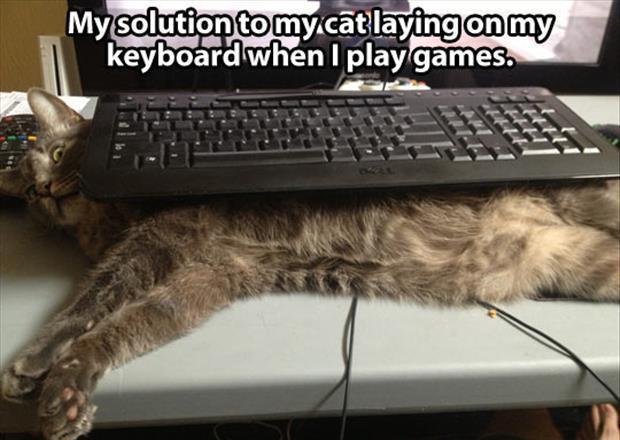 cat memes 2