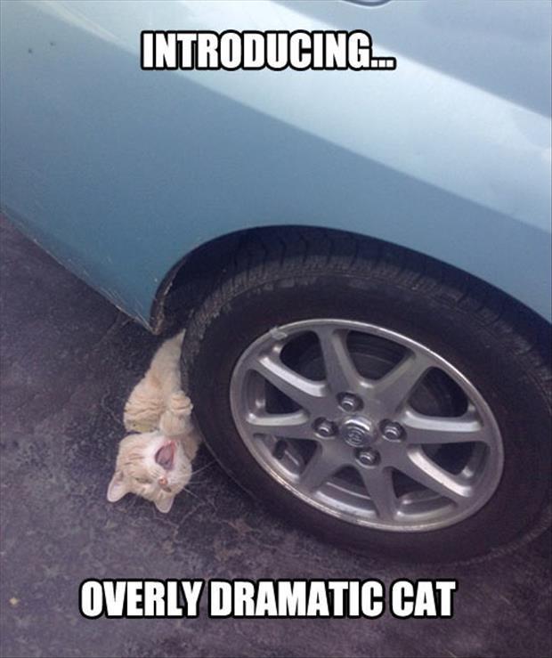 cat memes 7