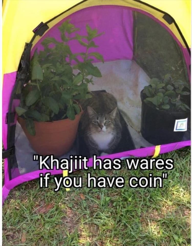cat memes 2020-1