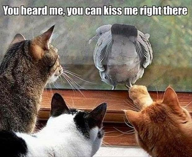 80 Funny Cat Pictures Captions Will Make You Jump Laughing